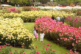 san-jose-rose-garden1
