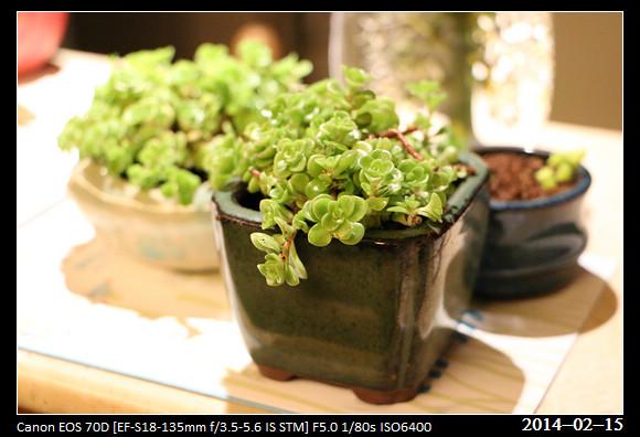 20140215_Green