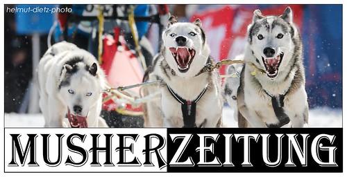 WSA Schlittenhunde WM 2014, Kandersteg - Rainer-Diemer