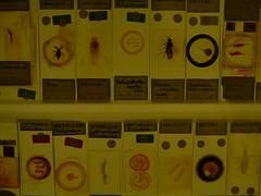 The Micrarium, Grant Museum, UCL