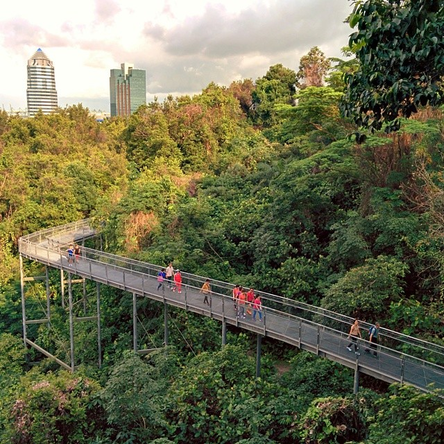 This is what hiking in Singapore looks like.