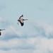 Cranes landing by Beatrijs Sterk
