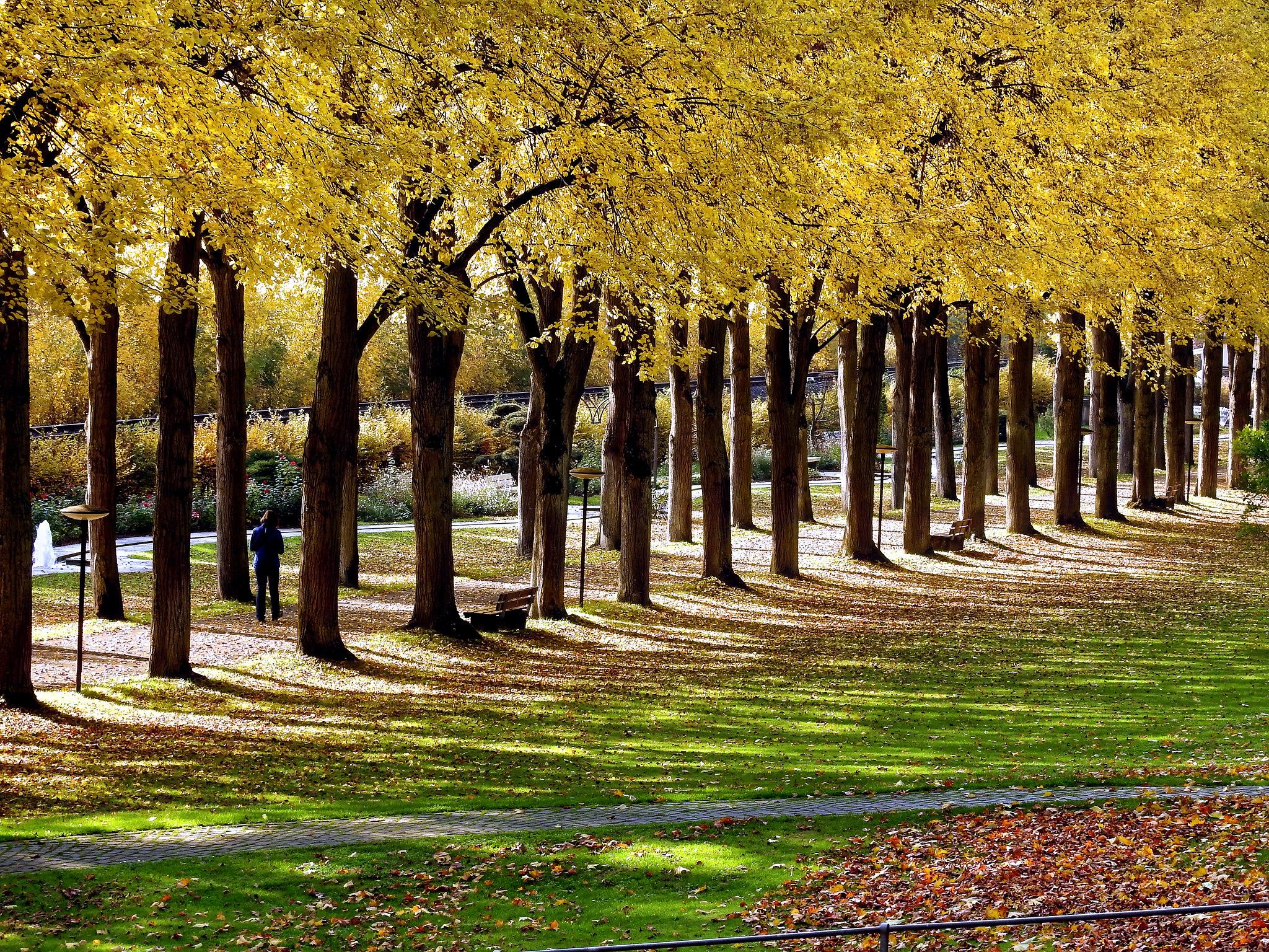 Der Bad Mergentheimer Kurpark im Herbst