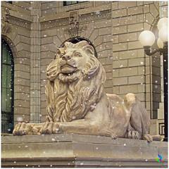 Live like lion