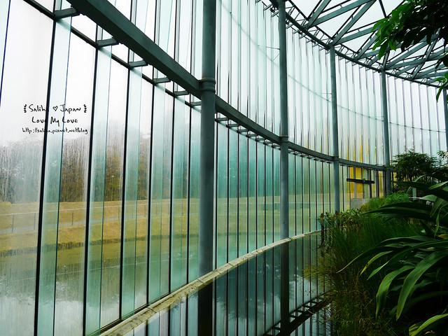 日本東京景點新宿御苑溫室植物 (18)