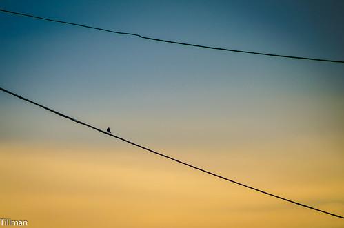 sunset sky bird high wire telephone northcarolina single forestcity rutherfordcounty