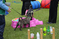 puppy(0.0), play(0.0), dog agility(0.0), dog sports(1.0), animal sports(1.0), dog(1.0), pet(1.0), conformation show(1.0),