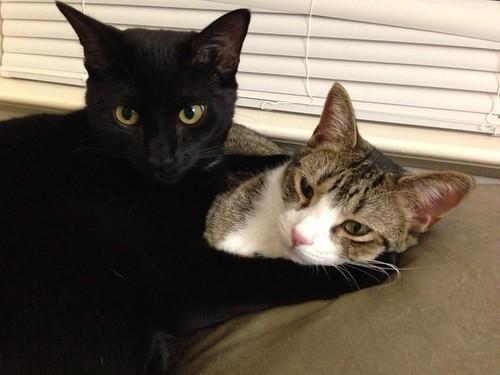 Martha and Amelia kittens