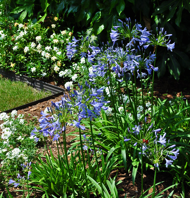 Goodman Garden (2)