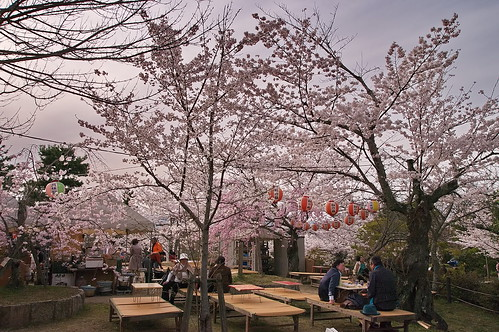 【写真】2013 桜 : 円山公園(2)/2020-11-17/IMGP9278