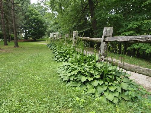 Schoepfle Garden - Birmingham, Ohio - Hosta along fence