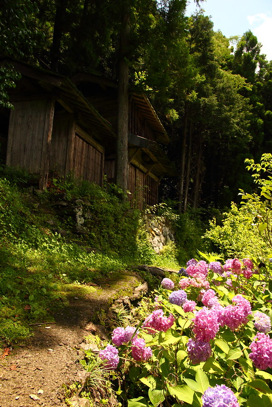 IMG_8199_6-16 Ikegawa Wandering