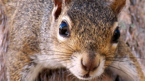 park trees portrait cute animal closeup river mammal oak furry squirrel view sebastian florida kodak bokeh fl riverview brevard z990