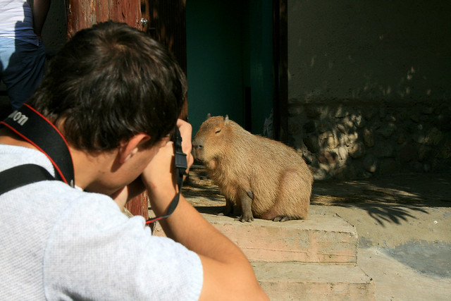 Taking photo of the capybara