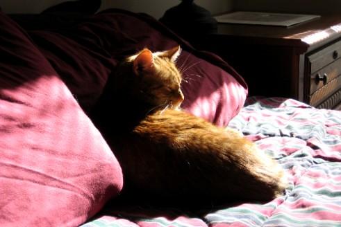 Murphy the Cat