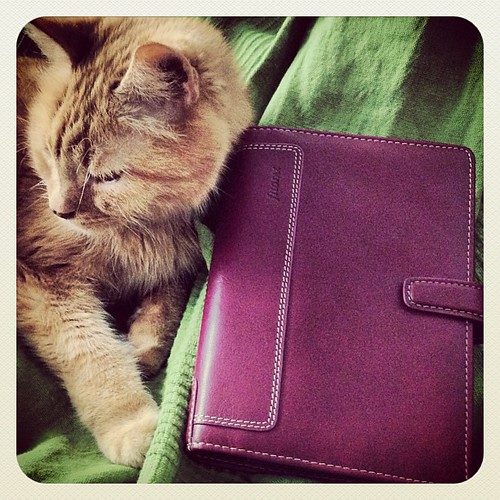 #filolifephotoaday - Day 2: At Home #filofax #cat