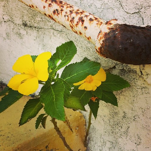 Opposites... #flowers #rust #themomentschallenge