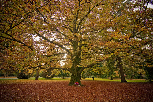 Shaughnessy Park by petetaylor