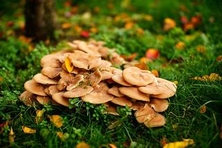 The Mushroom Season
