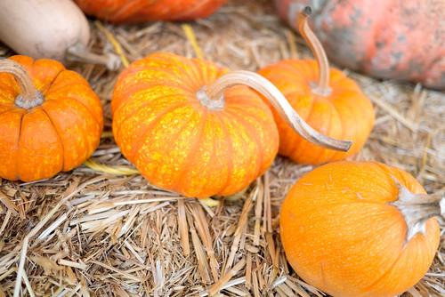 pumpkinpatch09