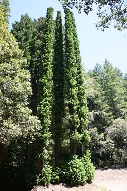 trees26