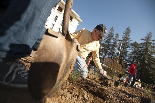 Mrak Hall Circle community planting day