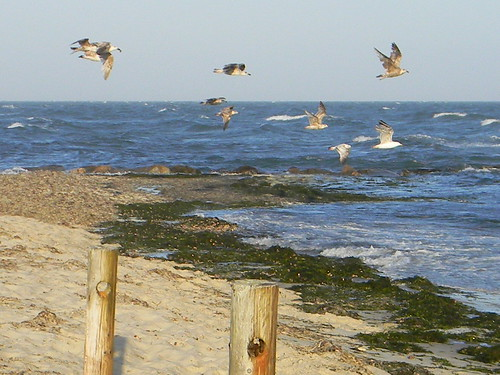A breezy afternoon on Nantucket Sound