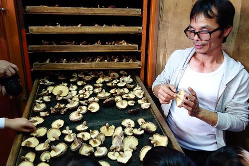香菇種植解說
