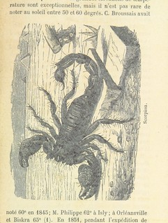 Image taken from page 175 of 'L'Algérie ... Ouvrage illustré, etc'