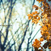 The autumn, last days by maritere-by mt photography