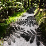 Giant fern shadows