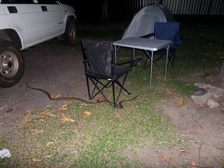Abendlicher Besucherr im Camp