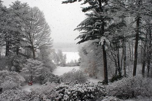 backyard view 1-18-2014