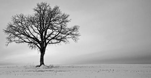 winter blackandwhite tree wisconsin clouds landscape nikon seasons deforest nikond5100 jakerost