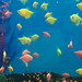 tropical-fish-coral-custom-tank-aquarium-sarasota-fl-6