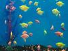 tropical-fish-coral-custom-tank-aquarium-sarasota-fl-6