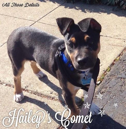 Haileys Comet