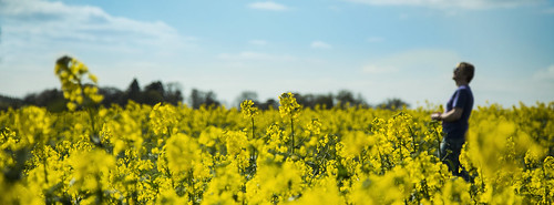 uk flowers blue england sky man blur male alex field smiling yellow clouds canon project landscape outside outdoors happy photography eos photo aperture northampton pretty bright bokeh walk farm small farming northamptonshire sunny depthoffield photograph crop cropped lovely priority stroll narrow depth dop av 52 within rapeseed 6d strolling f4l p52 24105mm alexandrou rapidrat
