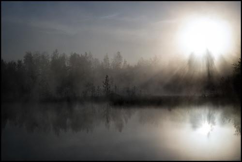 morning trees sun lake reflection tree sol water grass fog sunrise vatten träd soluppgång morgon dimma sjö gräs spegling