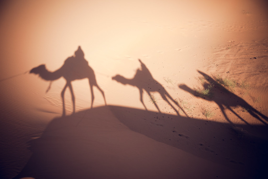 'Camel Crossing', Morocco, Merzouga, Hassilabied, Erg Chebbi