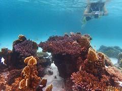 Coral Garden, Derawan Islands, East Borneo, Indonesia 2016