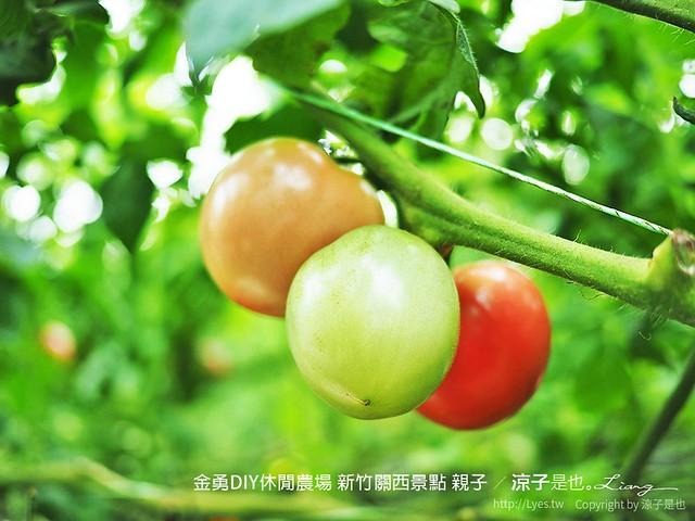金勇DIY休閒農場 新竹關西景點 親子 67