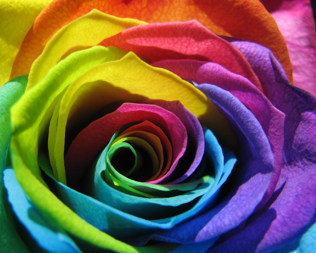 Week 24 macro for Pictures of rainbow roses