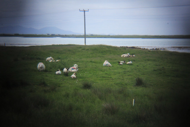north uist on the holga lens