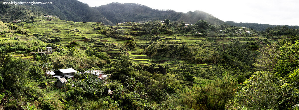 Bontoc Mountain Province Maligcong Rice Terraces