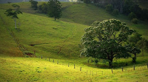 morning light tree nature landscape countryside scenery greens morninglandscape cattletpads
