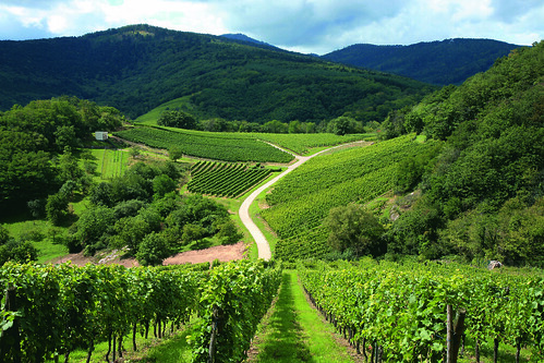 Alsace Wine trail Vosges France