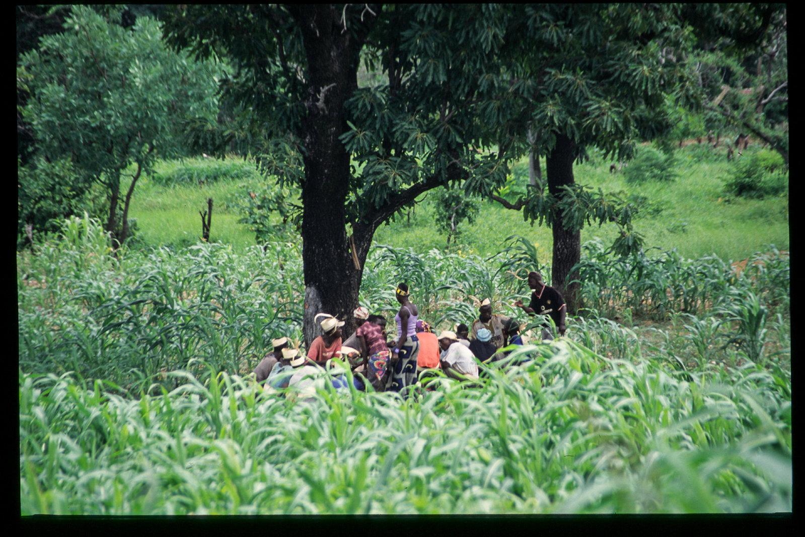 Senegal - Pause dans les champs de mil