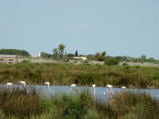 055 flamingo's