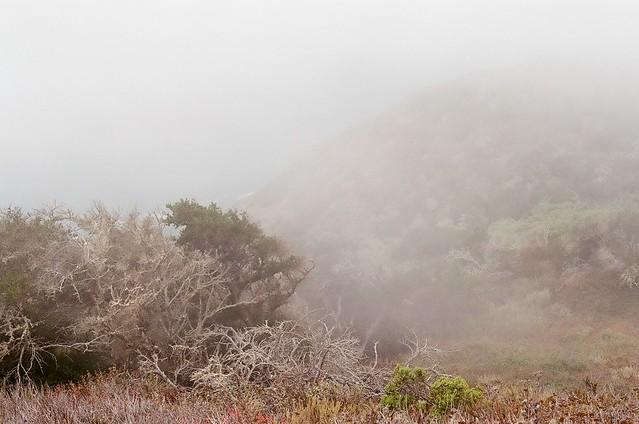 big sur - mist